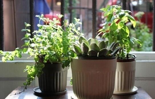 窗台装饰小tips 美美的角落才有情调!