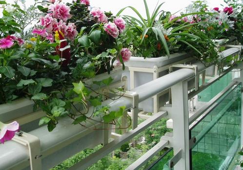 阳台绿化的重要作用 阳台绿化怎么做